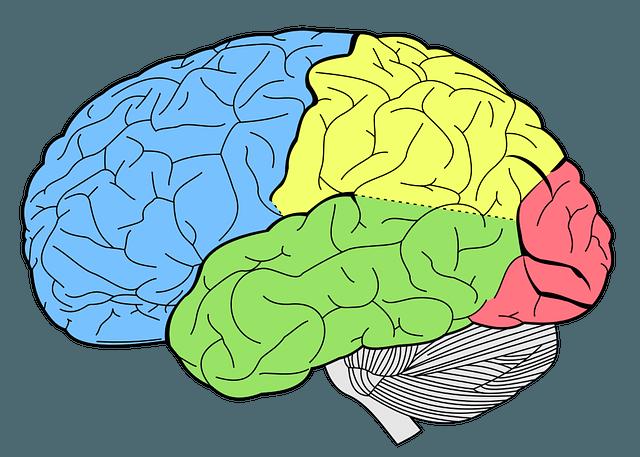 brain-1007686_640