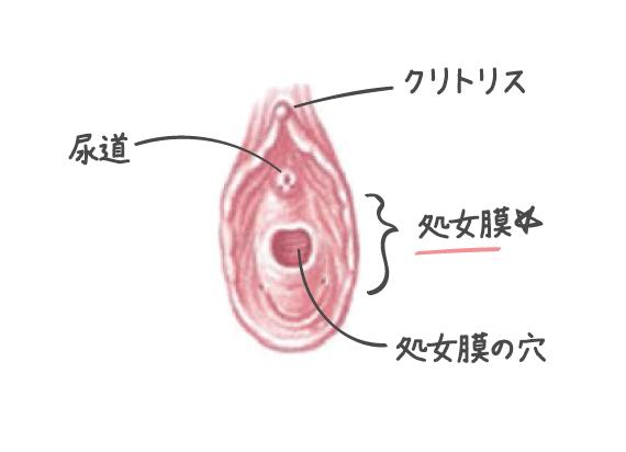 処女膜について